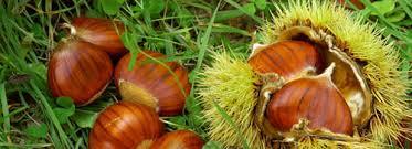 Vendredi 20 décembre : châtaignes, huile de noix et glaces
