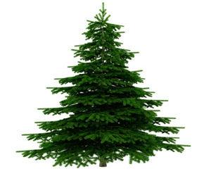 Sapins et décorations de Noël, vendredi 9, 16 et 23 décembre 2016
