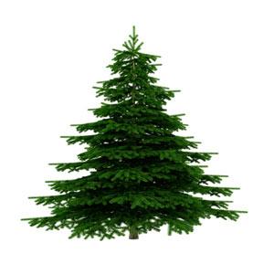 Sapins et décorations de Noël, vendredi 8, 15 et 22 décembre 2017