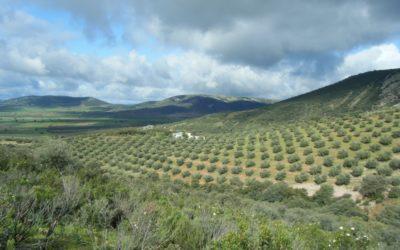Huile d'olive bio en vrac vendredi 26 avril 2019